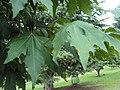 Jawaharlal Nehru Memorial Botanical Gardens, Srinagar 33.JPG