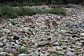 JimCorbett National Park.jpg
