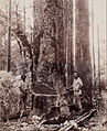 Josiah Martin - (Cutting Down the Kauri) - Google Art Project.jpg