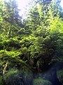 June Grüne Hölle Bergwälder Glottertal nordic trolls ^ specter - Mythos Black Forest Photography 2013 green mountain forest specter canyons - panoramio.jpg