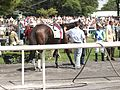 Just a Game Stakes Horse 10.jpg