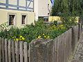 Kötzschenbroda Hirtenhaus Garten.jpg