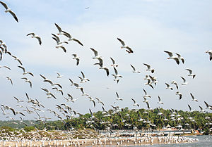 Kadalundi Bird Sanctuary - Kadalundi Bird Sanctuary