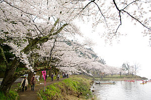 Takashima, Shiga - Kaizu-Osaki in the spring