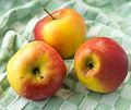 Kanzi apples.jpg