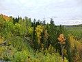 KareliaForest2.jpg