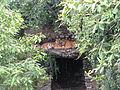 Kathmandu zoo Nepal (5086508722).jpg
