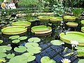 Kew Garden Visit (3656915308).jpg
