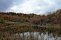 Kings Forest Marsh 2 Red Hill Valley.JPG