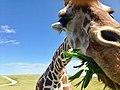 Kirkpatrick animals - Kathryn Kirkpatrick (39909468620).jpg