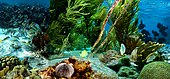 Little Bonaire Underwater life (js) .jpg
