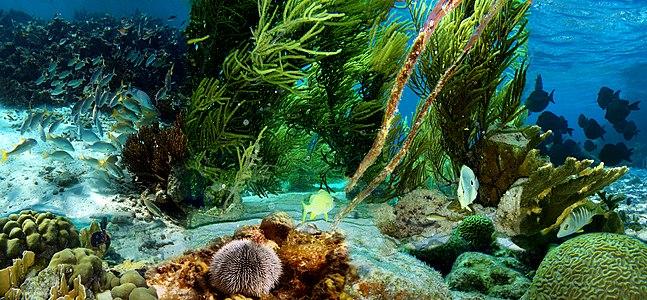 Underwater life of Klein Bonaire
