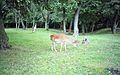 Knowsley Safari Park, Prescot - panoramio (3).jpg
