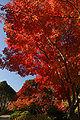 Kobe Suma Rikyu Park02n4592.jpg