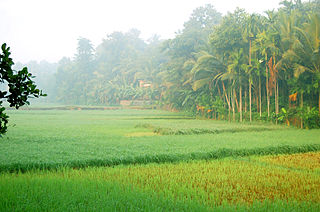 Kodiyathur village in Kerala, India