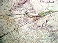 Koenigsdorfer Tunnel 1845.jpg