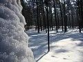 Koniec zimy w połowie marca - Wolica las - 07 - panoramio.jpg
