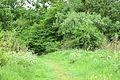 Kreis Pinneberg, Naturschutzgebiet Liether Kalkgrube 10.jpg