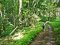 Kunersdorfer Forst - Waldweg (Woodland Path) - geo.hlipp.de - 39334.jpg