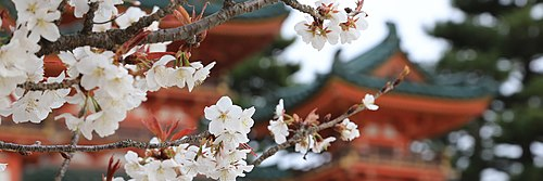 Kyoto banner cherry blossoms 6.jpg
