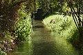 L2020683 המים והצמחיה של הנחל בלב קיבוץ דן.jpg
