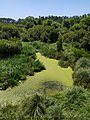 Lagoa da Apúlia.jpg