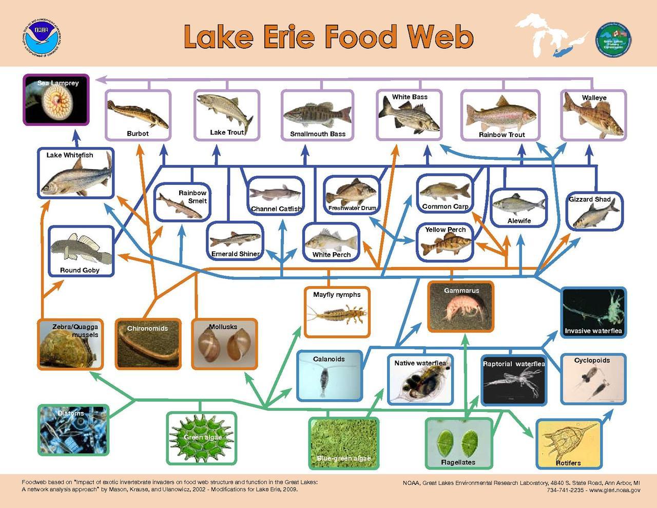 Original file      1 650   215  1 275 pixels  file size  748 KB  MIME type    Freshwater Biome Food Web