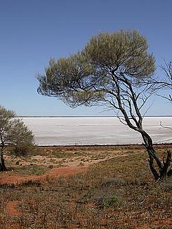 Lake Hart in South Australia.