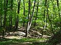 Landschaftsschutzgebiet Gestorfer Lößhügel (14).JPG