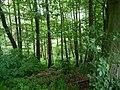 Landschaftsschutzgebiet Horstmanns Holz Melle -Waldanfang- Datei 8.jpg