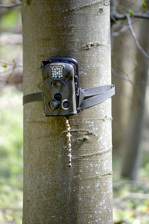 Landschaftsschutzgebiet Steinberg - Wildtierkamera; Trail Camera Uses
