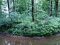 Landschaftsschutzgebiet Waldgebiete bei Dielingdorf und Handarpe LSG OS 00025 Datei 14.jpg