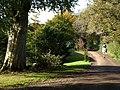 Lane, East Pennard - geograph.org.uk - 1025329.jpg