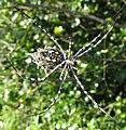 Large spider (6930968831).jpg