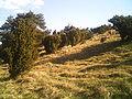 Larris de St-Aubin Montenoy047.JPG