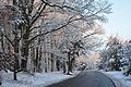 Las Bialoleka Dworska Waluszewska zachod zima.jpg