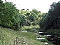 Lathkill Dale, near Over Haddon - geograph.org.uk - 1455677.jpg
