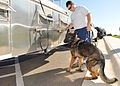 Law enforcement conducts K-9 water training 120918-F-TS228-014.jpg