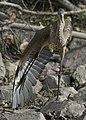 Le Grand Heron 4.jpg
