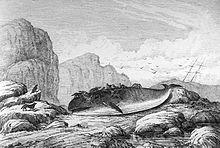 La baleine dans les arts et la littérature dans BALEINE 220px-Le_Labrador_-_Baleine_d%C3%A9vor%C3%A9e_par_des_loups