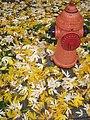 Leaves - hydrant - Flickr - Ryan Forsythe.jpg