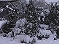 Letenské sady - panoramio (76).jpg