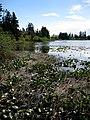 Lily pad lakeside. INFO IN PANORAMIO DESCRIPTION - panoramio.jpg