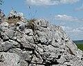 Limestone - geograph.org.uk - 1390712.jpg