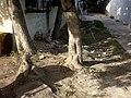 Limpieza y reforestación - panoramio.jpg