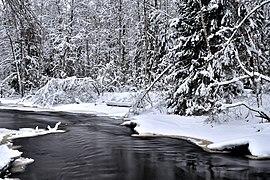 Lindulovskaya grove in winter.jpg