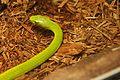 Lizards Alive - Fernbank Museum - Atlanta - Flickr - hyku (16).jpg