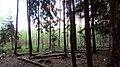 Lobnya, Moscow Oblast, Russia - panoramio (15).jpg