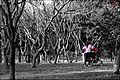 Lodhi garden picnic.jpg
