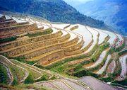 Rice terraces in Longji, Guangxi, People's Republic of China.